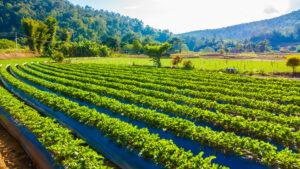 slider-2-agroform-asesoramiento-productores-frutas-hortalizas