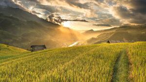 slider-3-agroform-consultoria-agraria-agricultura-ecologica